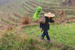 Asian farmer in traditional Chinese hat, among the rice terraces Stock Image