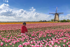 Asian farmer in a tulips farm. Little asian farmer in tulips farm landscape with pink red tulips and a windmill Royalty Free Stock Photos