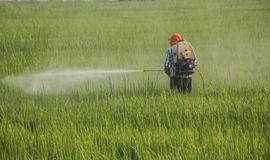 Asian farmers using pesticides Nebulizer royalty free stock photography