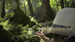 Asian female biologist use a magnifying glass to see the details of flora and fauna in tropical forest ecosystem during summer.