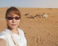 Asian female tourist taking selfie at Wahiba desert in Oman with. Background of camels herd sitting on hot sand, waiting for camel ride activity stock images