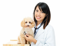 Asian female veterinarian Royalty Free Stock Photography