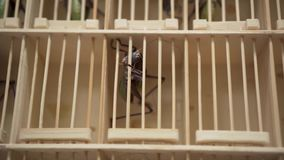 Asian Flea Market Giant Grasshoppers in a Cage. Xii`an, China stock footage