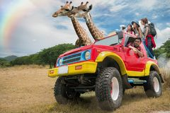 Asian friend group travel open zoo by jeep Stock Images