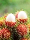 Asian  fruit rambutan Stock Photos