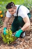 Asian gardener cropping a plant Stock Photos