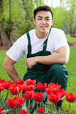 Asian gardener with tulips Royalty Free Stock Image