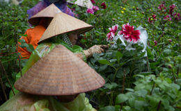 Asian gardeners with traditional conical hat taking care of a botany garden Stock Image