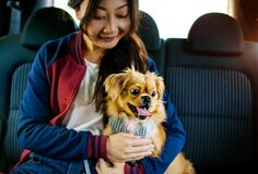 Free Asian Girl And Cute Dog In Comfort Car Taxi On Summer Travel Stock Images - 186717454