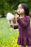 Asian girl blowing on sonchus. On a meadow Stock Images