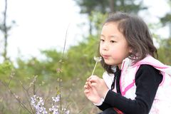 Asian girl and Dandelion Royalty Free Stock Image