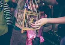 Asian girl with her mother to set free a little bird for merit f. Asian girl with her mother to set free a little bird from the cage for merit, outdoors in the Royalty Free Stock Photography