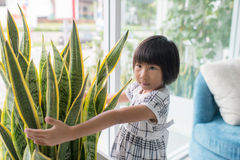 Asian girl hugging tree in vase at home. Stock Photos