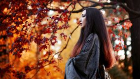 Asian girl in kimono on background of red maple. Asian girl in kimono on a background of red maple Royalty Free Stock Images