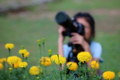 Children take photo of yellow flower and interesting of biology Stock Images