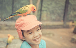 Asian girl with a Pet parrot on head Royalty Free Stock Photography