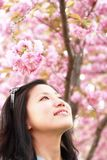 Asian girl in the spring outing. The girl under the oriental cherry tree is appreciating the oriental cherry Stock Image