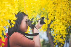 Free Asian Girl Take Photo With Blooming Yellow Flower Royalty Free Stock Images - 91524659