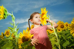 Asian girl walks in a field of sunflowers Stock Image