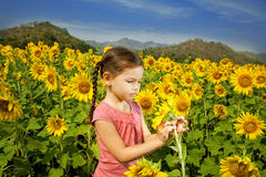 Asian girl walks in a field of sunflowers Stock Images
