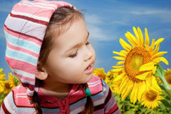 Asian girl walks in a field of sunflowers Royalty Free Stock Image