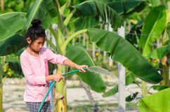 Asian girl watering banana tree in field. With sunny day Royalty Free Stock Photo