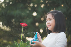 Asian girl watering a red flower in the garden Royalty Free Stock Photos
