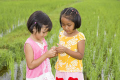 Asian girls with grasshopper Royalty Free Stock Photo