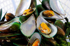 Asian green mussel Royalty Free Stock Photos
