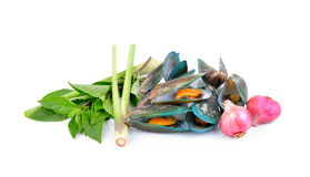 Asian green mussel  boiled with herb on white Stock Image
