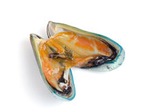 Asian green mussel Stock Photos