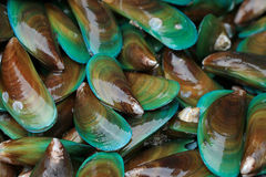 Asian green mussel Stock Photo