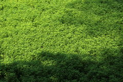 Asian green swamp Royalty Free Stock Images