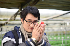 Asian handsome tourist man wearing overcoat in strawberry greenhouse Stock Image