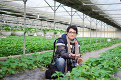Asian handsome tourist man wearing overcoat in strawberry greenhouse Stock Photos