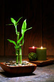 Asian Inspired Zen Relaxation Scene with Bamboo. Asian inspired Zen serene scene with bamboo stems in a wood bowl and candles burning with a soft glowing flame Stock Photography