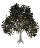 Asian or japanese persimmon tree - 3D render Stock Images