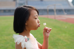 Asian kid blowing dandelions in the field royalty free stock photos