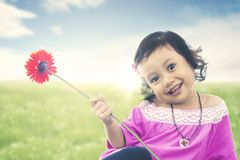 Asian kid brings garbera flower on meadow with sunlight. Summer or spring concept. Stock Image