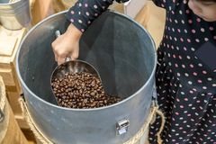Asian kid holding stainless scoop with roasted coffee beans in c stock photography