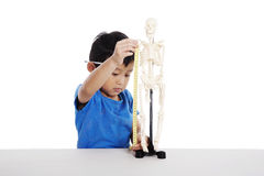 Asian kid measuring human skeleton model. Asian boy learns biology isolated on white Stock Photo