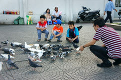 Asian kid, pigeon Royalty Free Stock Image