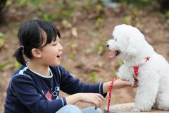 Asian kid playing with dog. Asian kid playing with a toy poodle dog Royalty Free Stock Photo
