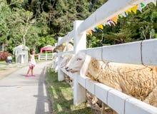 Asian kids girl feeding grass to sheep Royalty Free Stock Photos