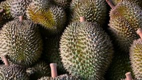 Asian king of fruits Durian is on the counter in the night market in Thailand. Durians are very large and the price is expensive. Exotic tropical fruit with stock video footage