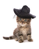 Asian kitten with summer hat Royalty Free Stock Photos