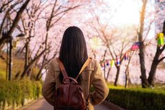 Asian lady travel in cherry blossom park in Seoul city stock photo