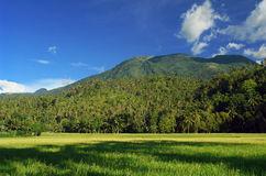 Asian landscape with mountains and rice field. Asian tropical landscape with an extinct and coconut-trees covered volcano in the background, and a fresh young royalty free stock images