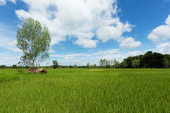 Asian landscape with ricefield Stock Images