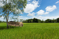 Asian landscape with ricefield Royalty Free Stock Image